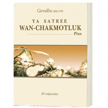 Giffarine Wan-Chakmotluk (Curcuma Xanthorrhiza)